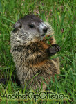 Baby-Woodchuck-the-timid-one