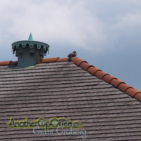 Roof Ventilator and bird